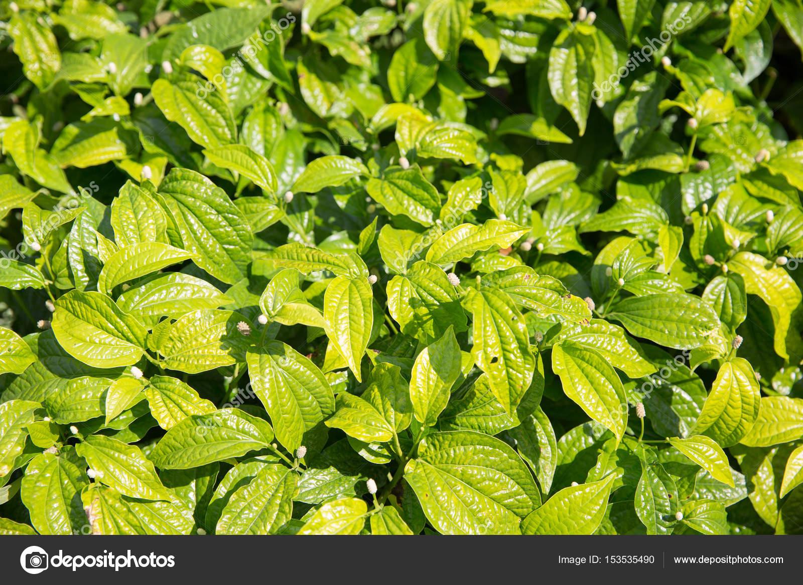 Beeindruckend Grüne Pflanzen Foto Von Flora Und Natur Konzept - Grüne Auf