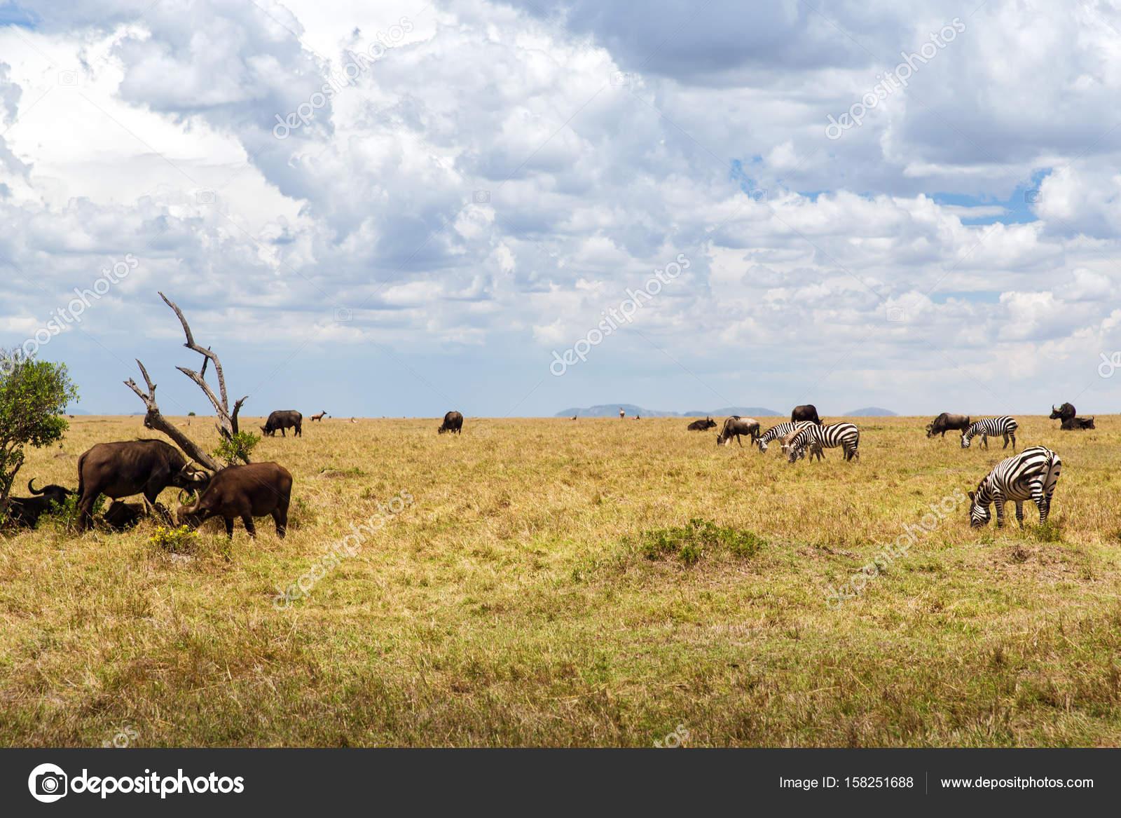 Herbivore Animals