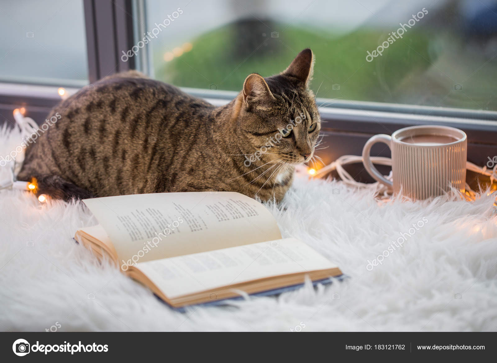 Pręgowany Kot Leży Na Parapecie Z Książki W Domu Zdjęcie Stockowe