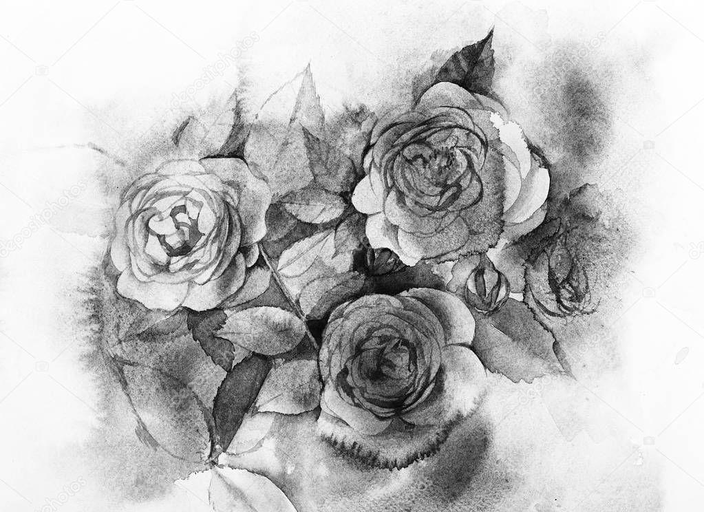 Pintura Acuarela De Rosas Blanco Y Negro Fotos De Stock Ultrapro
