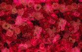Kép a fal virág
