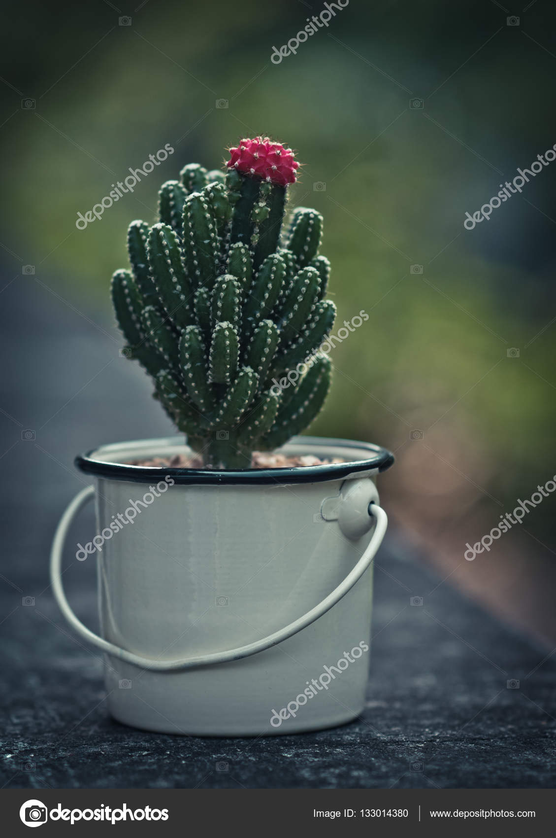 Beau Cactus Avec Fleur Rose Photographie Pixbox77 C 133014380