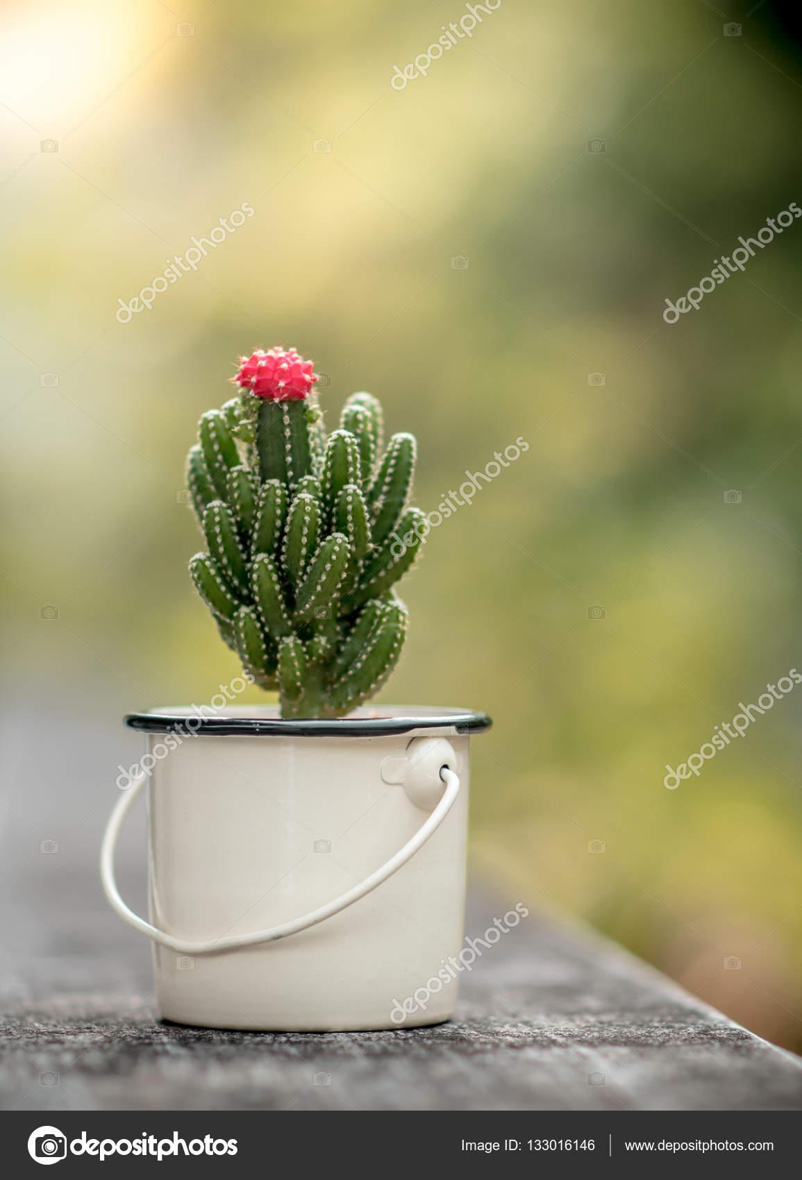 Beau Cactus Avec Fleur Rose Photographie Pixbox77 C 133016146