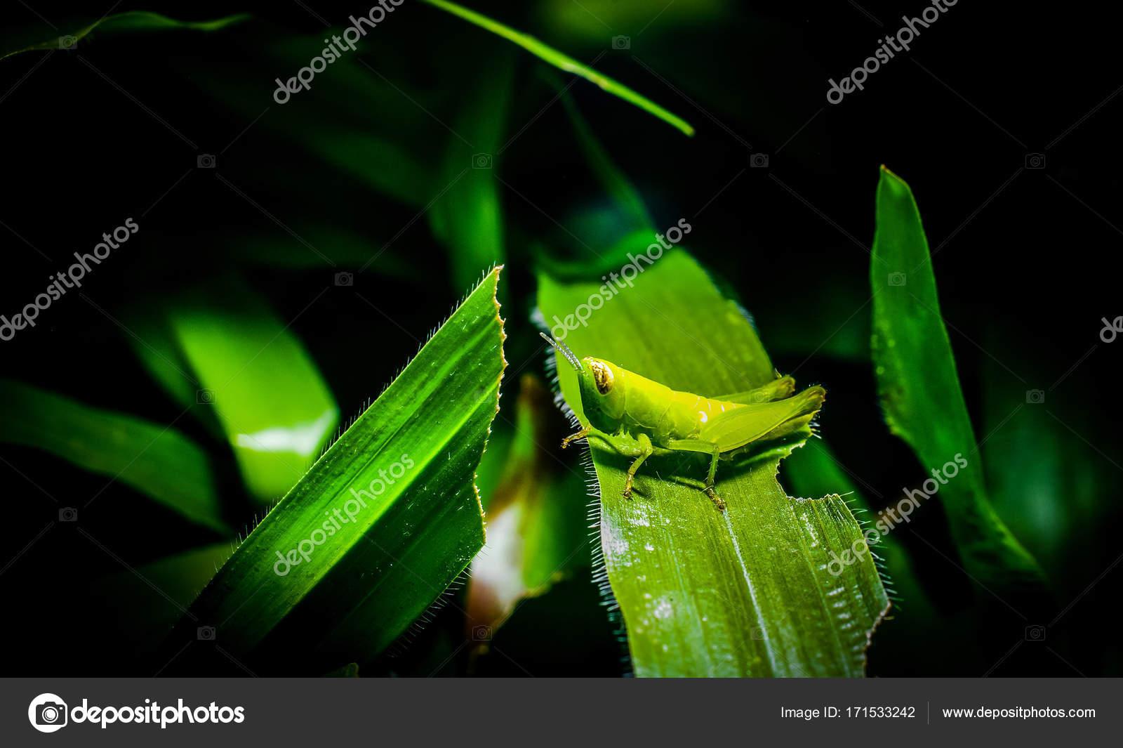 saltamontes en rama — Fotos de Stock © pixbox77 #171533242