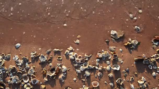 Tengeri szörfözhet a seashell beach a homok