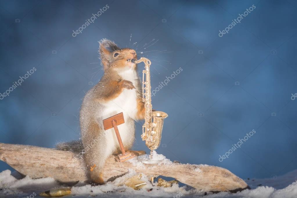 the squirrel solo