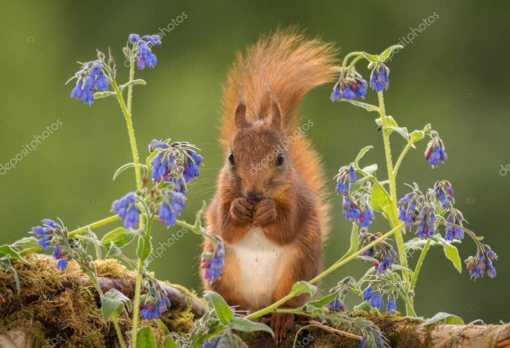the squirrel blues