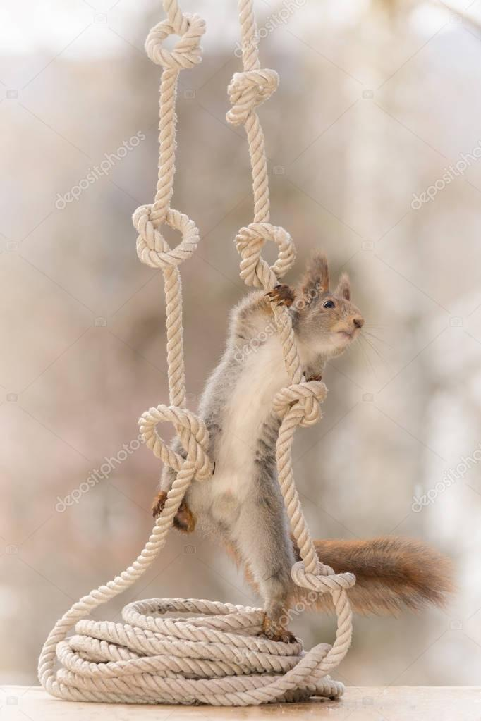 climbing in ropes