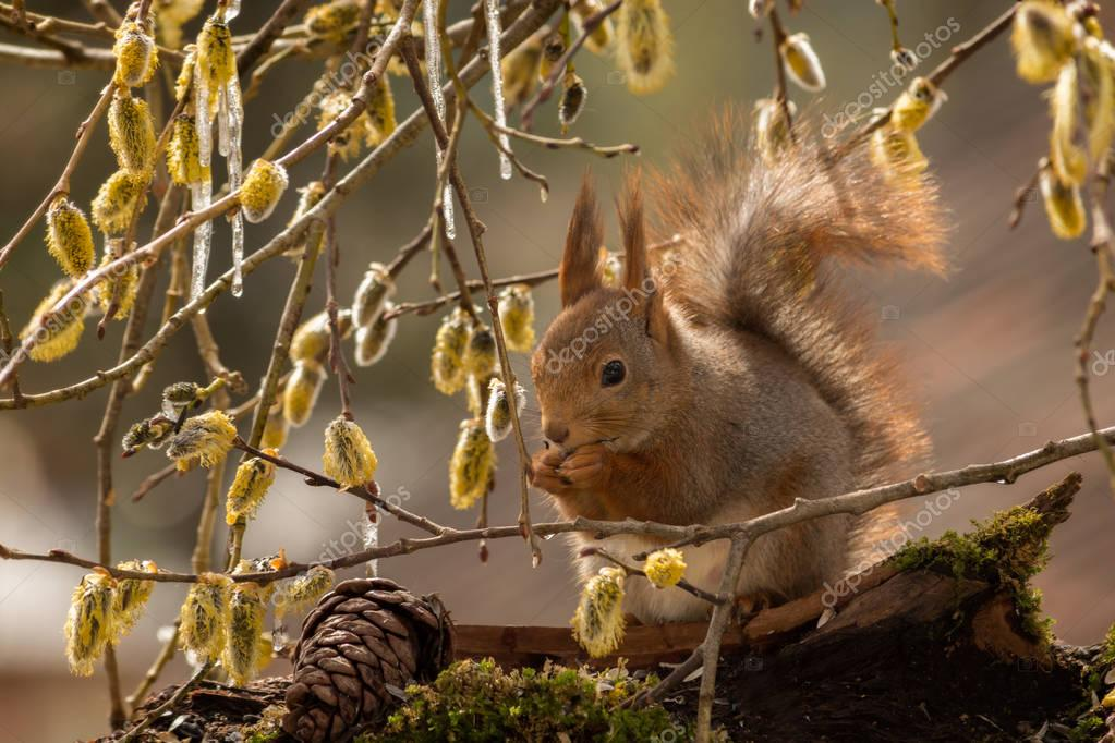 squirrel and flower icicles