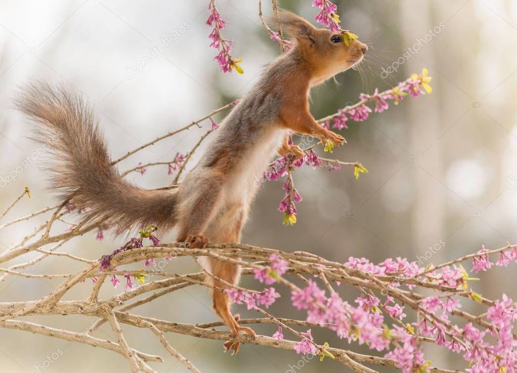 squirrel wants up