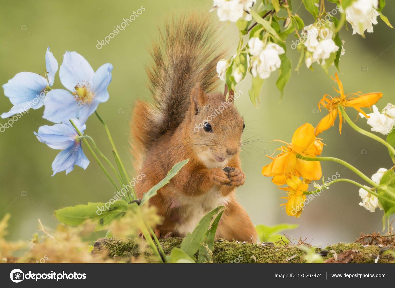 fiori gialli yahoo