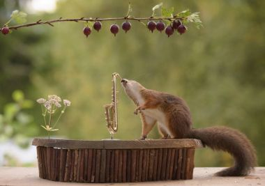 squirrel playing on a saxophone