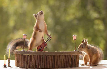 squirrels with an violin