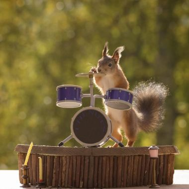 squirrel stands behind a Drum Kit