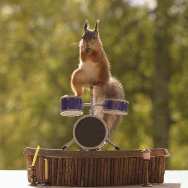 squirrel standing on a Drum Kit