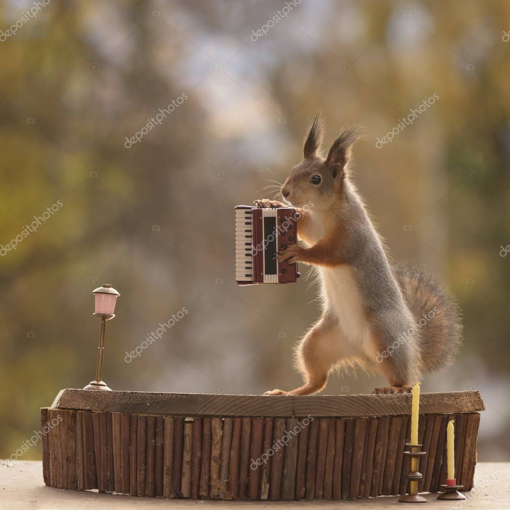 squirrel standing with a Harmonica