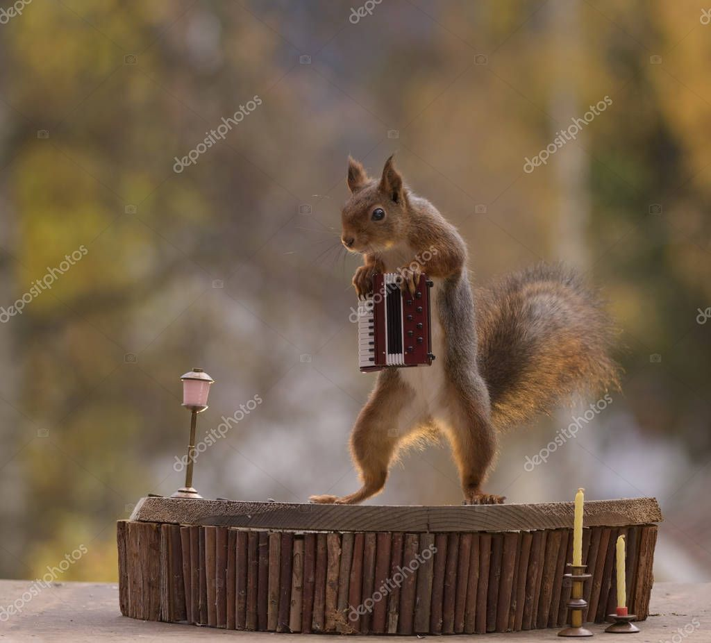 squirrel leaning on a Harmonica