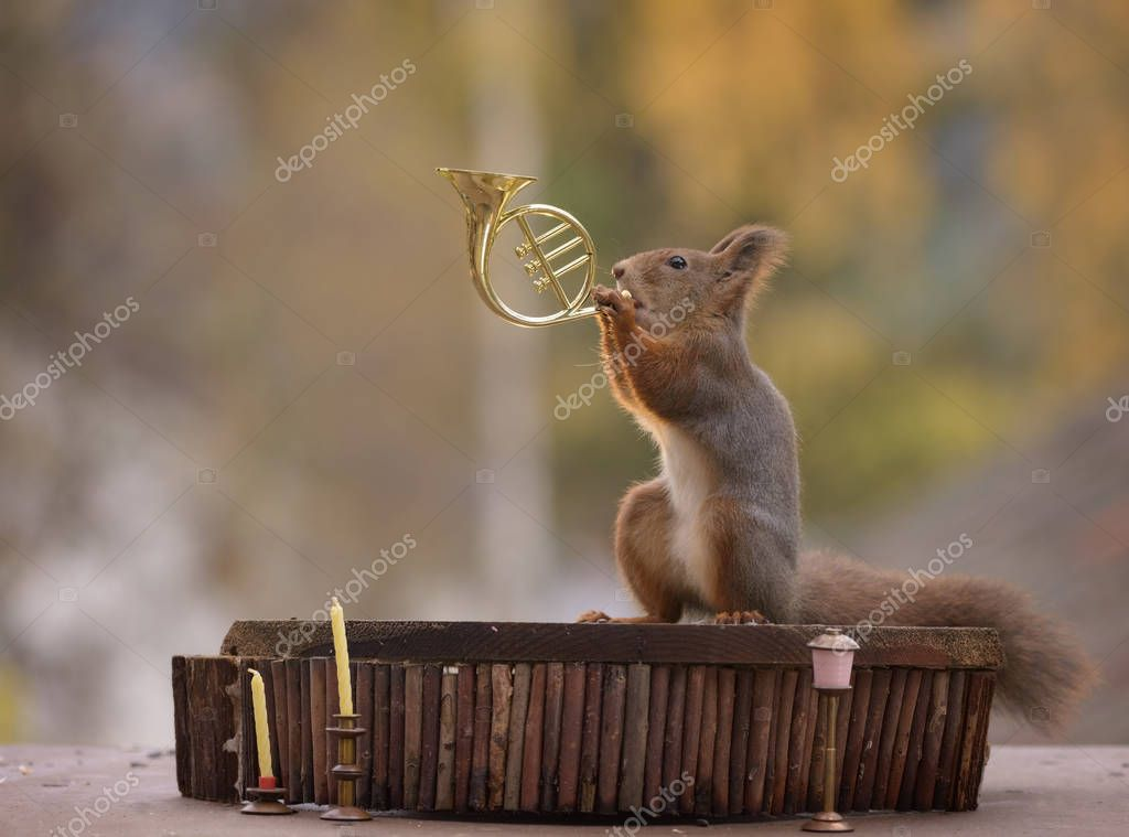 squirrel playing a french horn