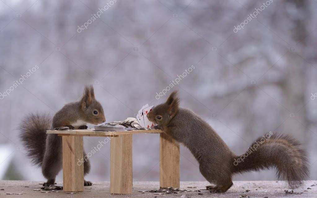 squirrels with table and Playing Cards