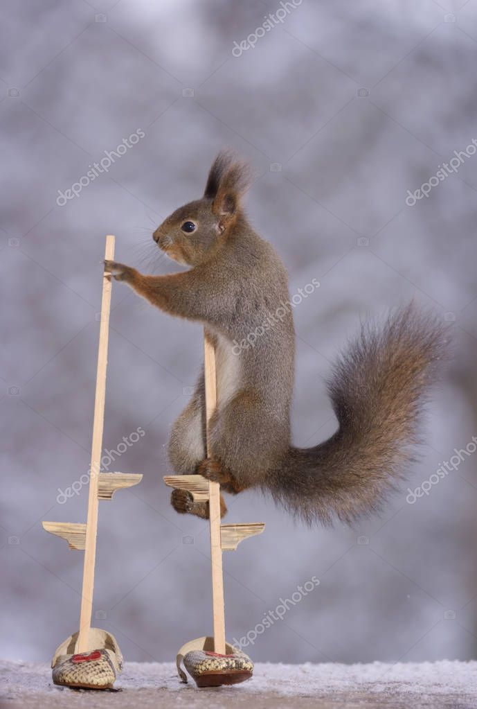 squirrel  holding on to stilts with shoes