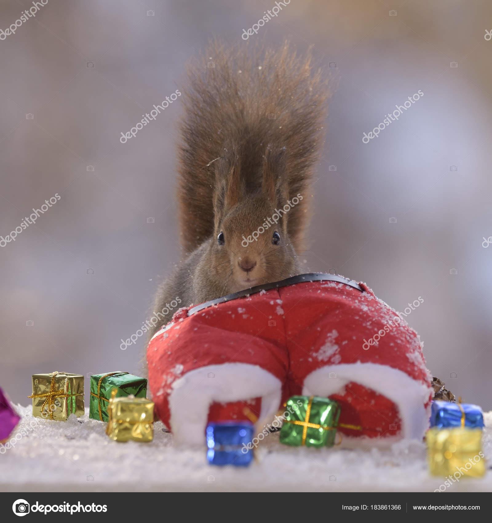Eichhörnchen im Schnee zu Weihnachten Hosen Tasche — Stockfoto ...