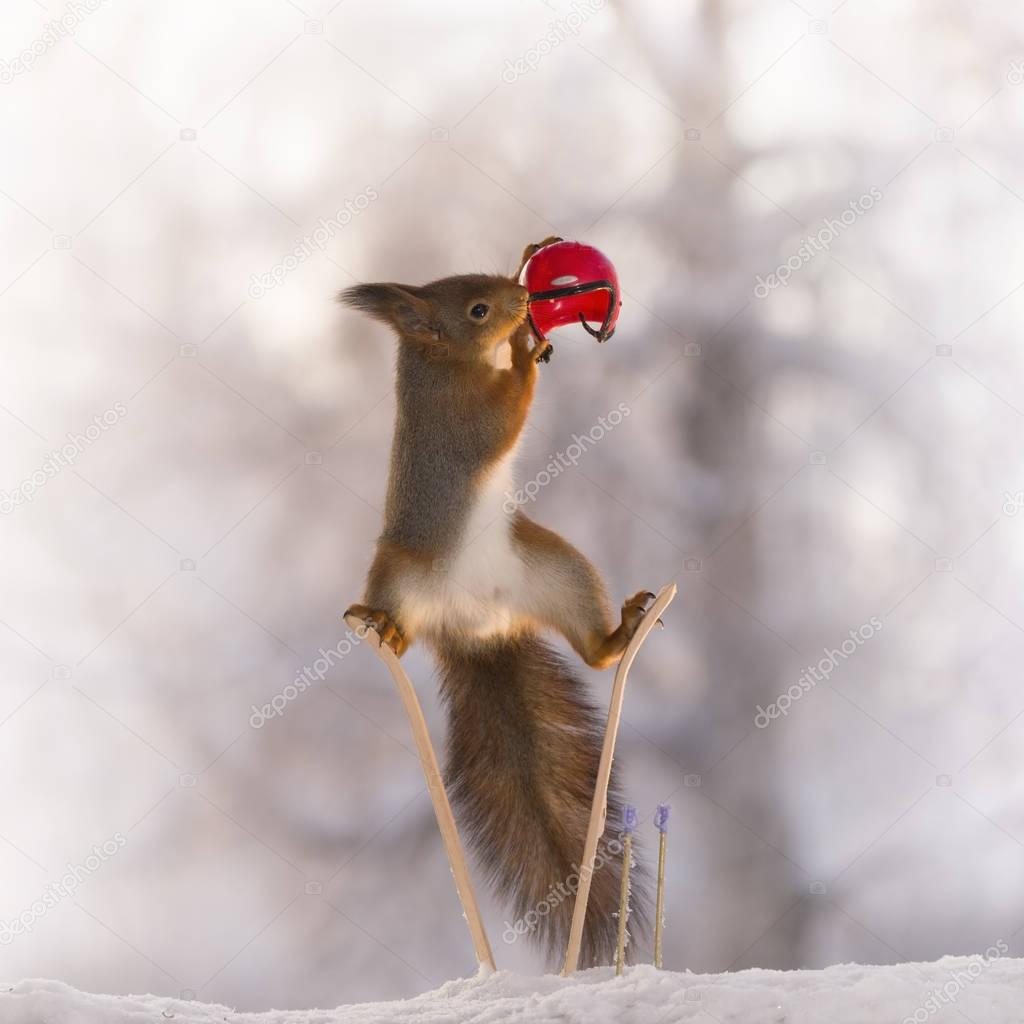 red squirrel in split on skis with helmet