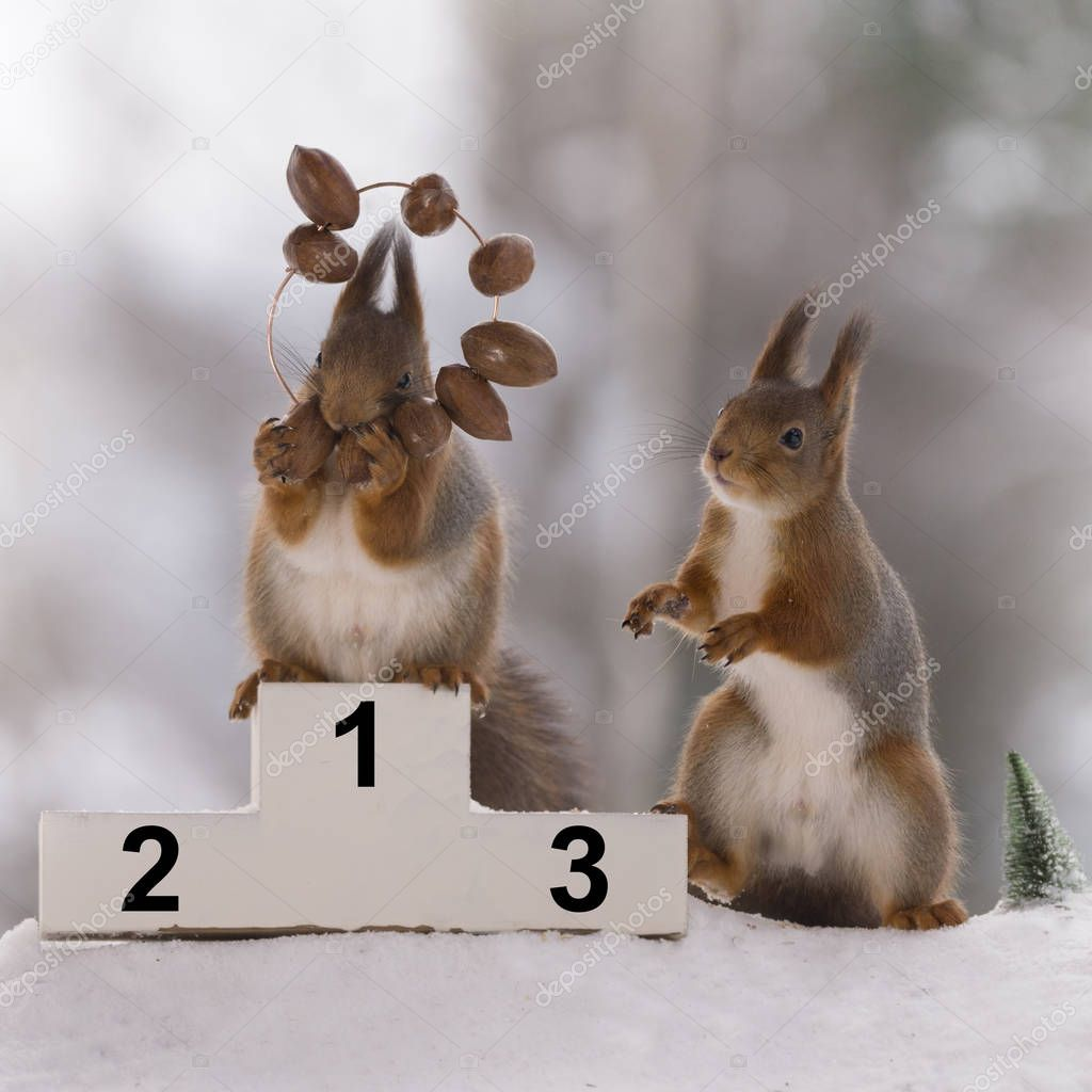 red squirrel stands on podium  with a nut medal
