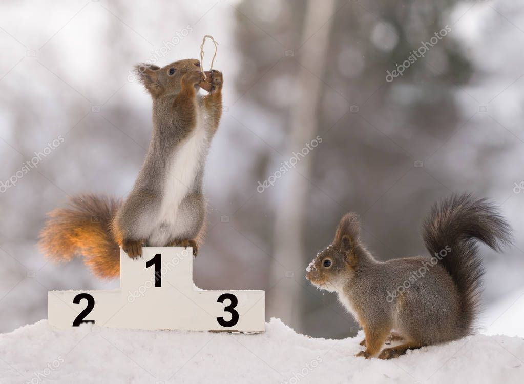 red squirrel standding on a podium  with winter games