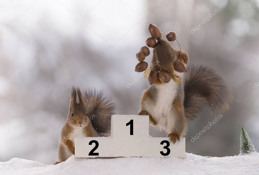 red squirrel stands on podium  with a nut wreath