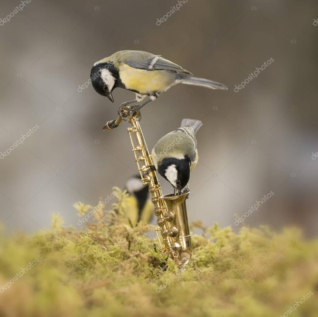 two great tit on a Saxophone