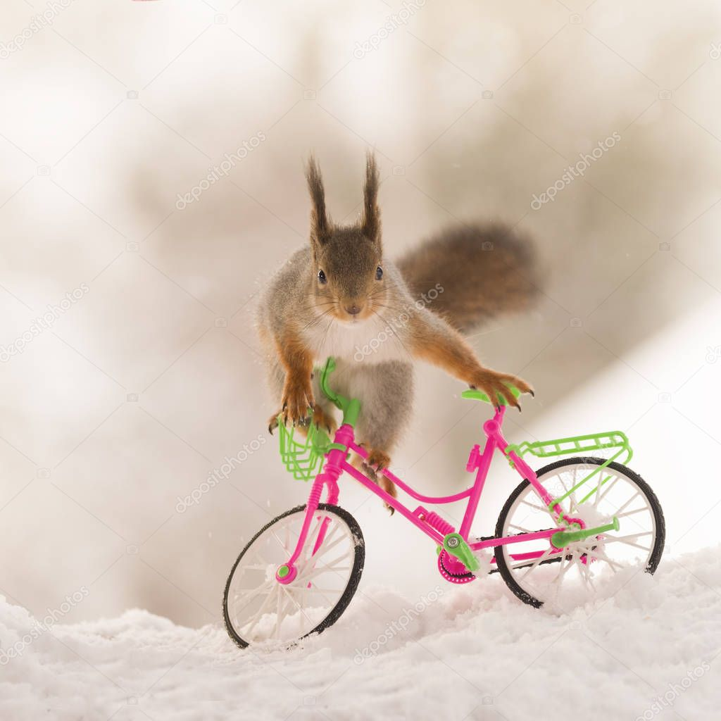 red squirrel climbing on a bicycle