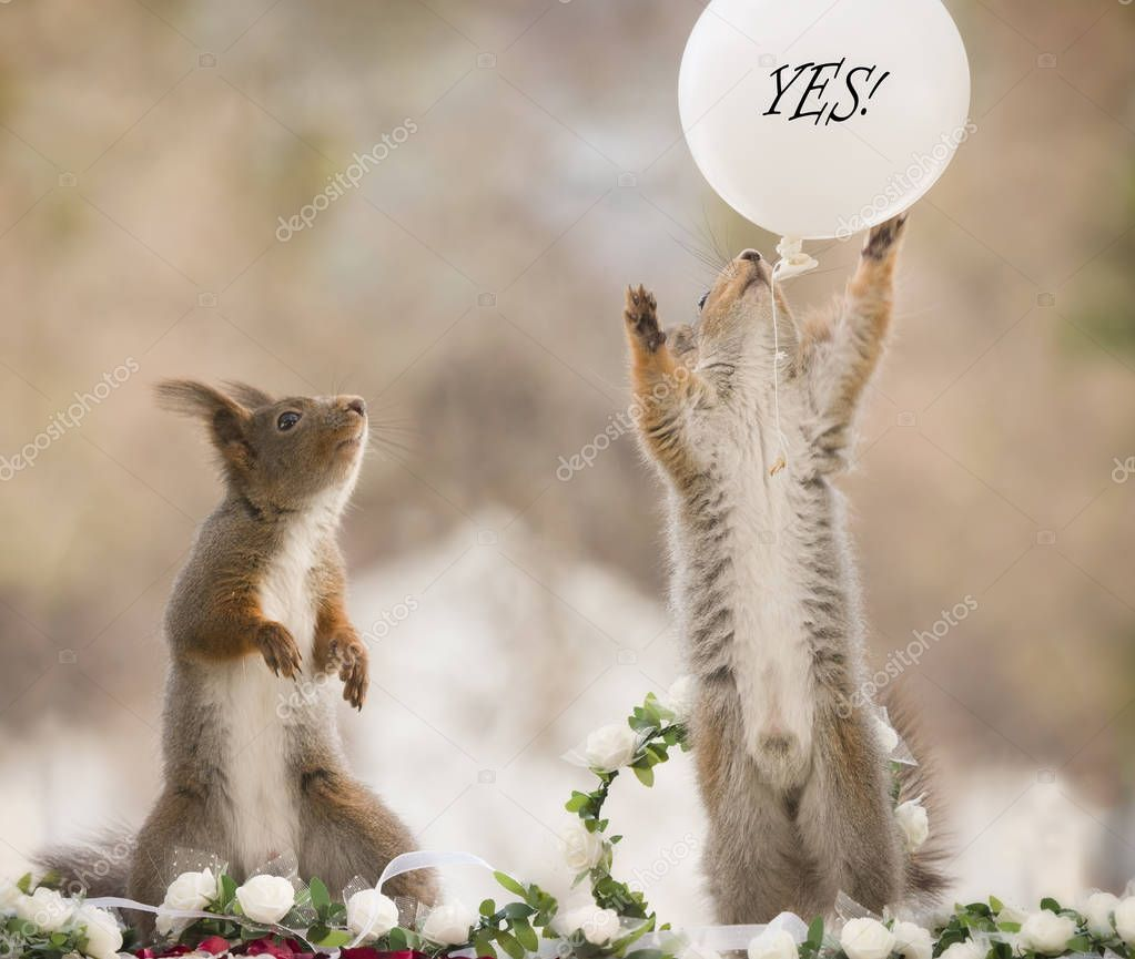 red squirrels with a white yes balloon