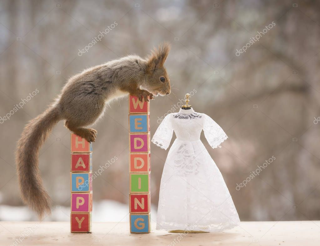red squirrel with  wedding text and an wedding dress