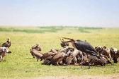 Marabu africkými mezi hejno supů