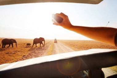 Tourist taking photos of elephants family