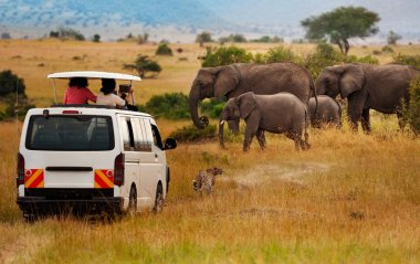 Tourists taking picture of elephants