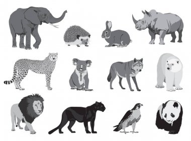 various wild animals