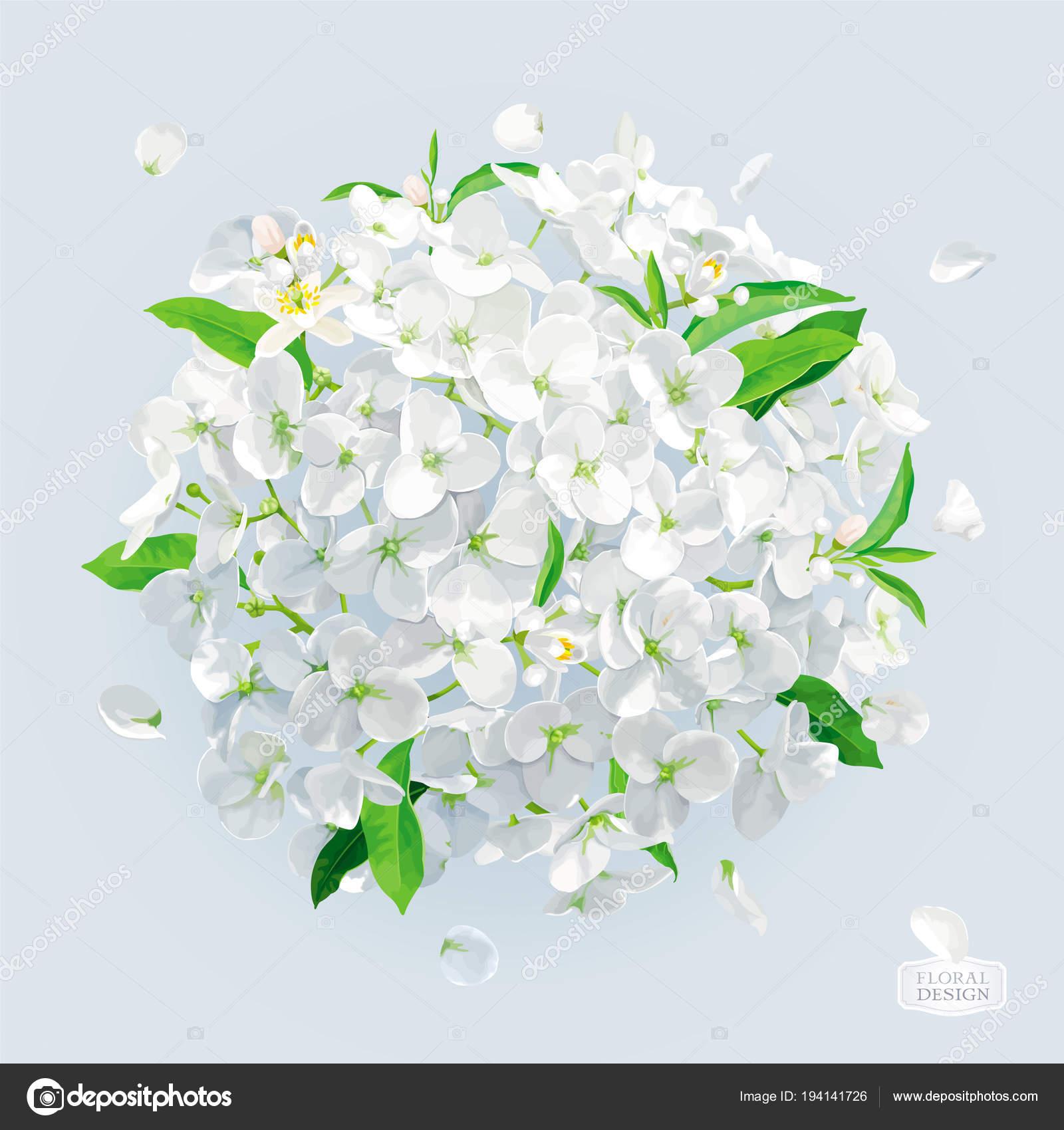 Fleur D Hortensia Blanc Avec Feuilles De Dessin Vectoriel Image