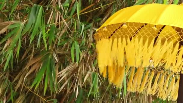 Umbrella, bamboo and wind