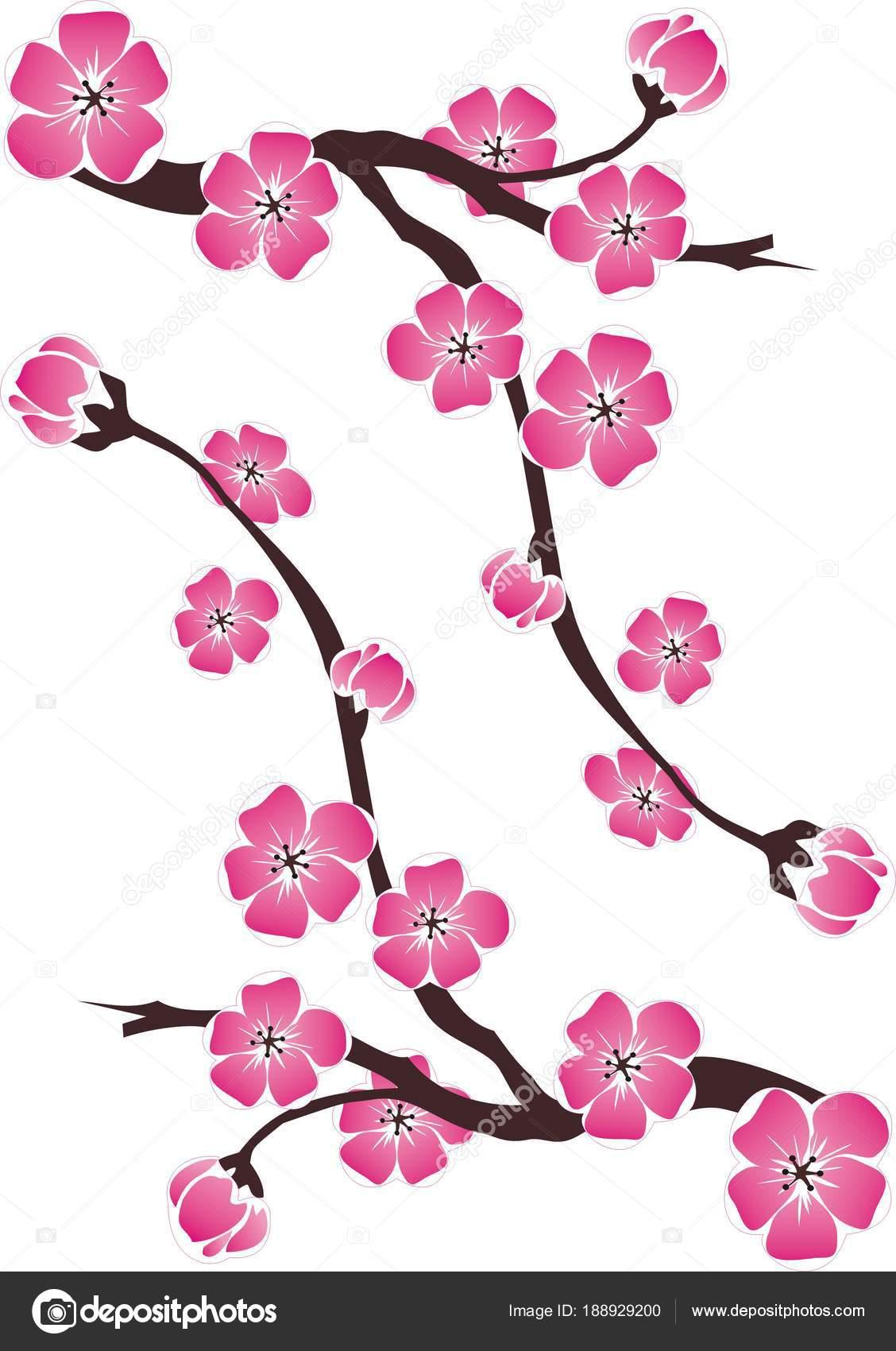 Dibujos Flor De Cerezo Rama Flores Cerezo Sobre Fondo Blanco