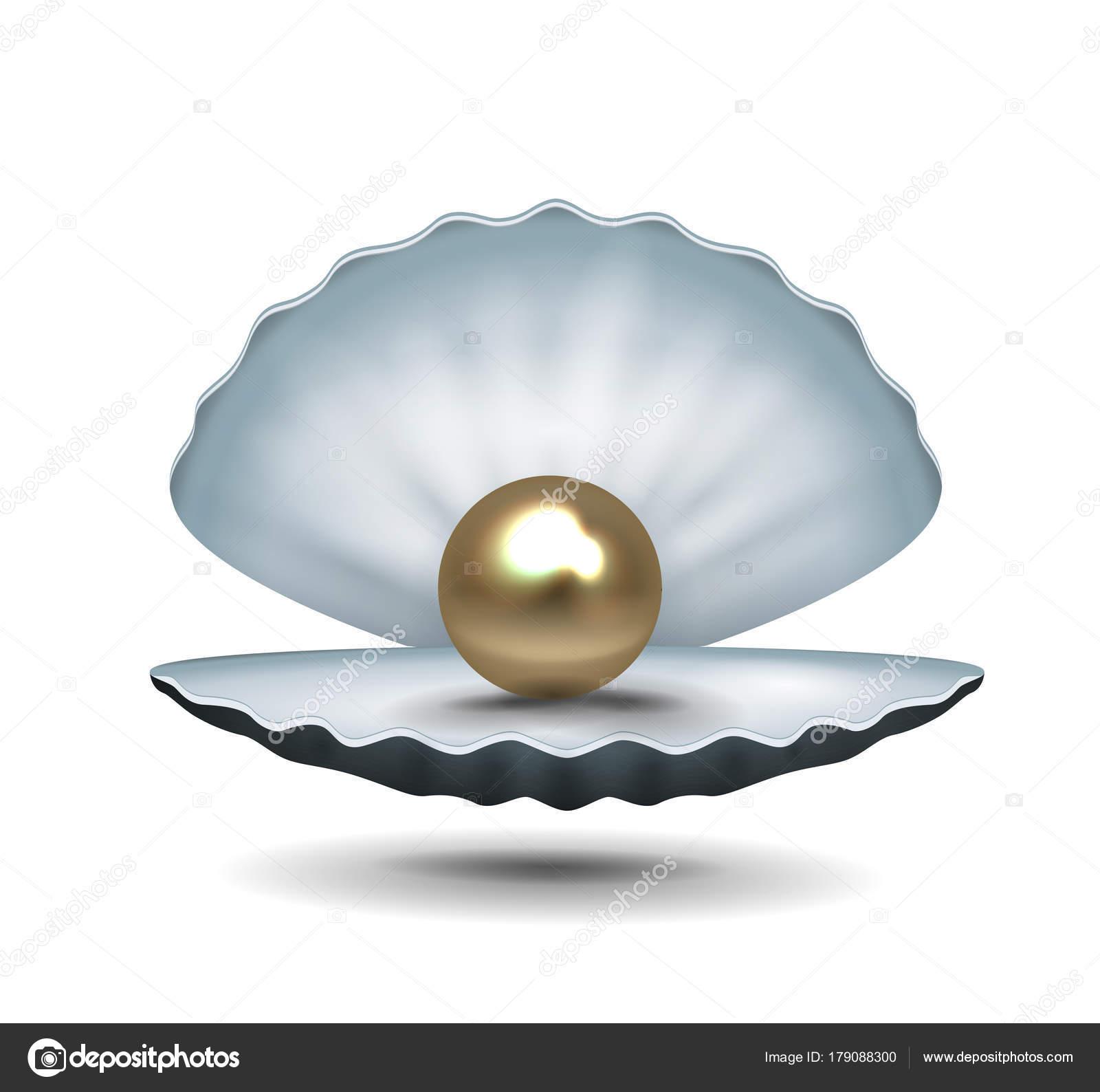 Euro Pearl Shell — Stock Vector © kosecki #179088300