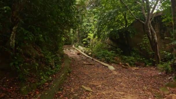 kamenitá stezka v husté tropické parku
