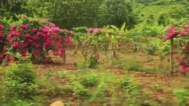 Panorama tropických lesů a křovin