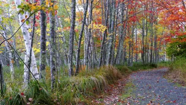 Őszi út fákkal