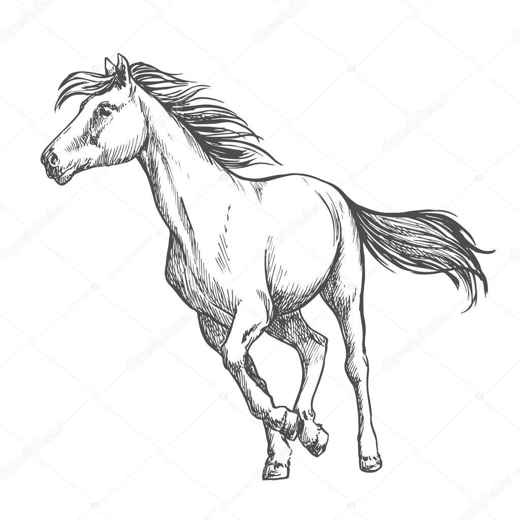 White Horse Freely Running Sketch Portrait Stock Vector C Seamartini 125123478