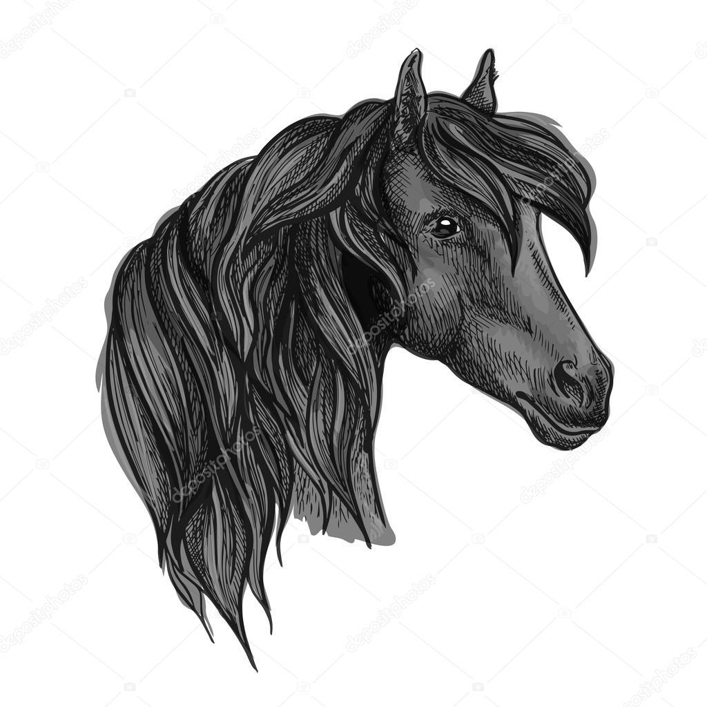 Arabian Horse Head Sketch For Equine Sport Design Stock Vector C Seamartini 127501554