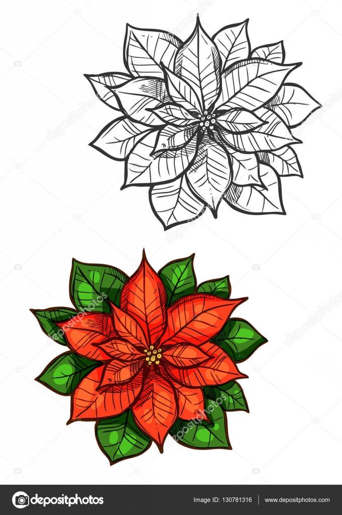 Dibujo aislado de navidad flor de pascua flor estrella - Imagenes flores de navidad ...