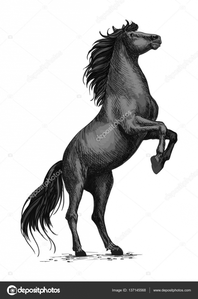 Horse Rearing Illustration