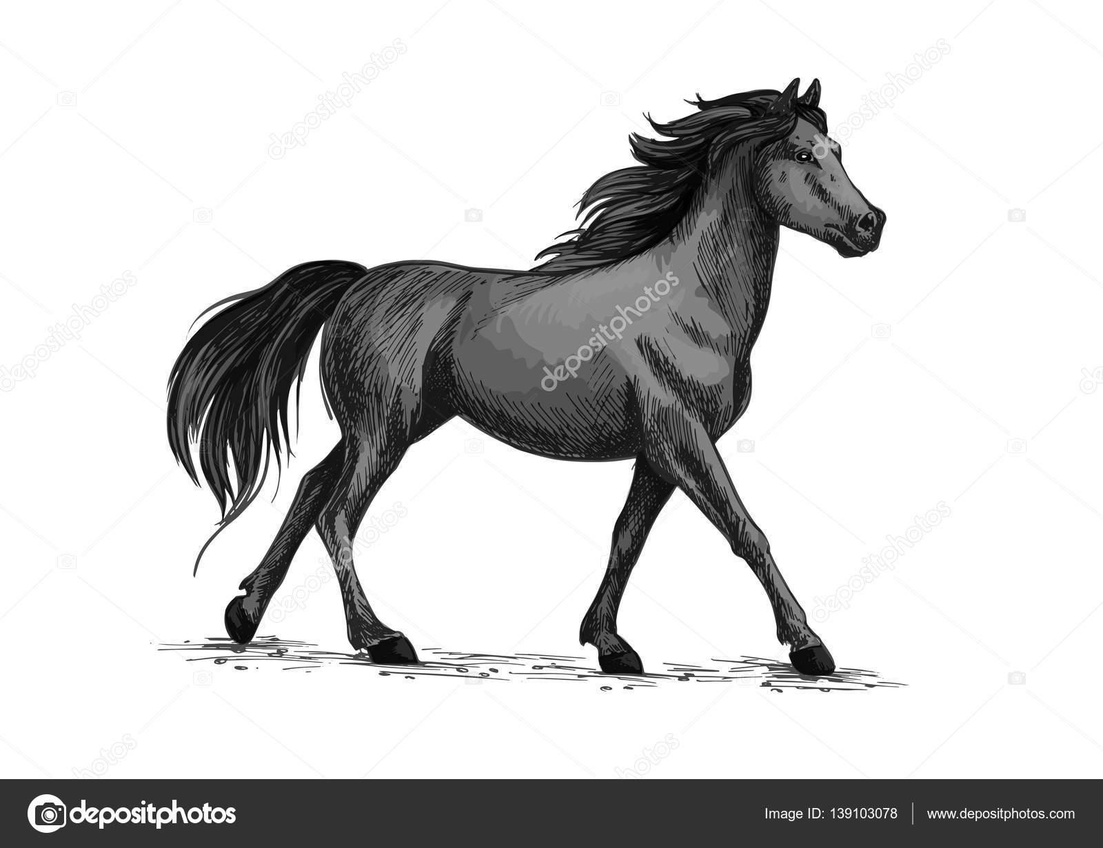 Pferd geht oder läuft, schwarze Mustang Vektor Skizze — Stockvektor ...