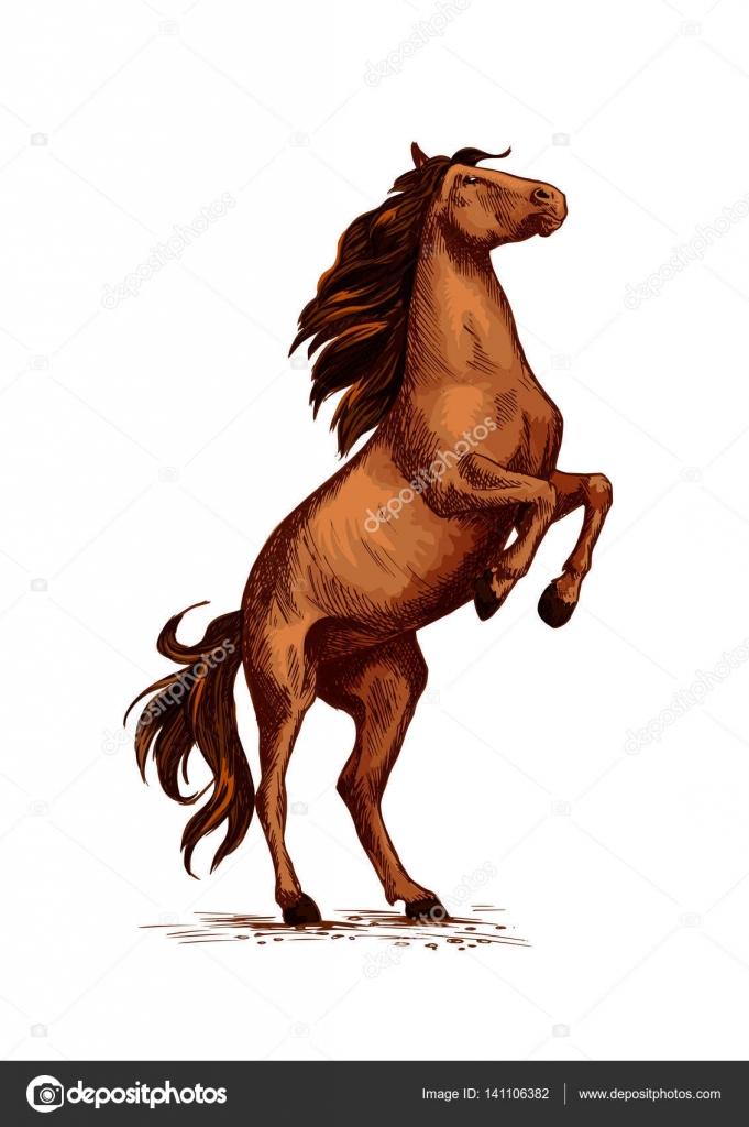 Rearing Wild Horse Vector Sketch Symbol Stock Vector Seamartini